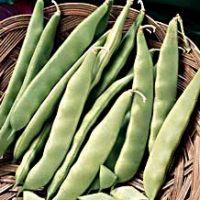 Бобы овощные — однолетние перекрестноопыляющиеся растения