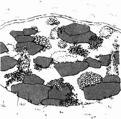 Положите на поверхность почвы между крупными камнями мелкие камни и осколки