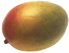 Фрукт манго является плодом мангового дерева
