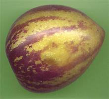 Плоды пепино употребляют в свежем виде на десерт,