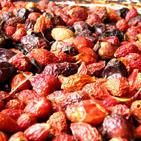 Сушат культурные и дикорастущие ягоды