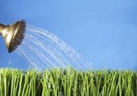 дачники используют  для поливки овощей прудовую, речную, озерную или дождевую воду