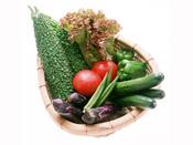 Овощи – источник минералов и витаминов