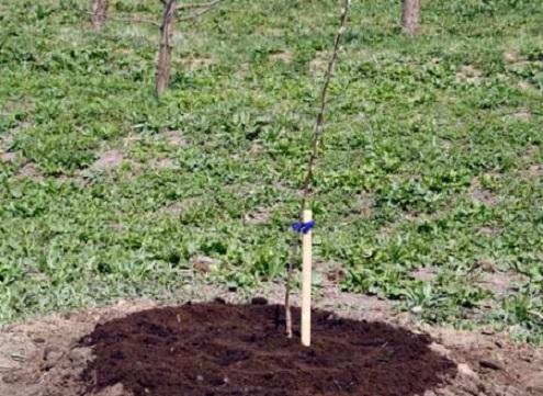 Посадка фруктовых деревьев осенью