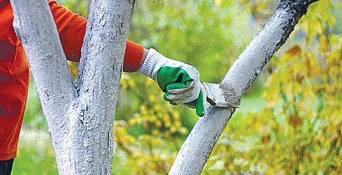 Осенние-работы-на-огороде-в-ноябре