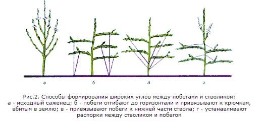 obrezka-molodyx-yablon-vesnoj