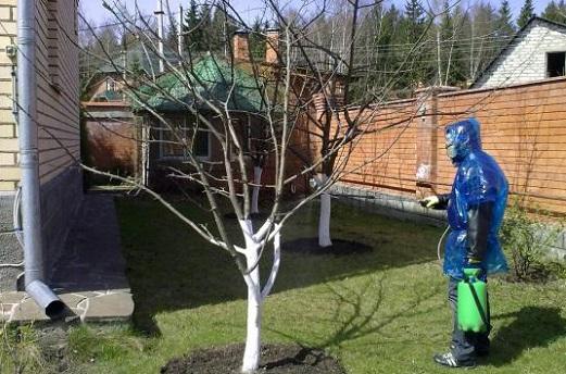 Чем опрыскивать яблони весной?