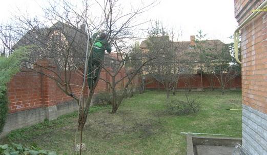 Как ухаживать за яблоней весной?