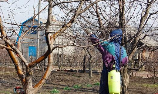 Чем обработать деревья весной?