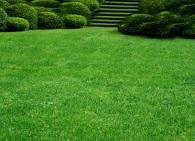 Как вырастить ровный и красивый газон