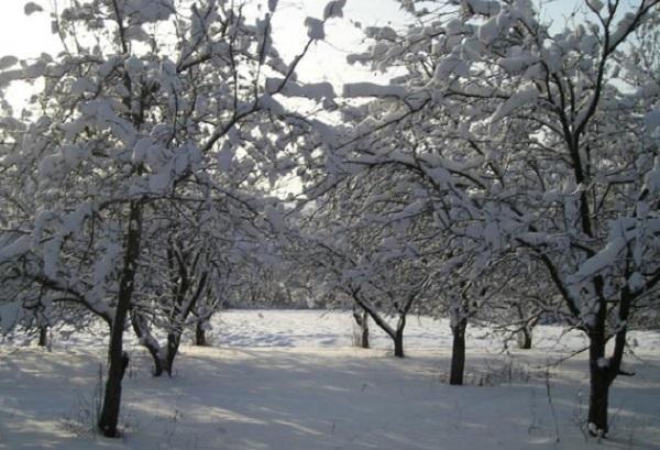 uxod-za-sadovym-uchastkom-v-zimnem-periode