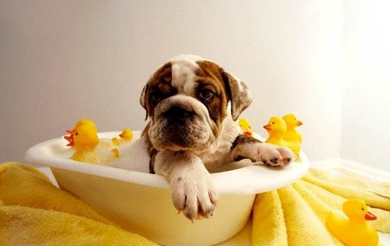 kak-pravilno-kupat-domashnee-zhivotnoe