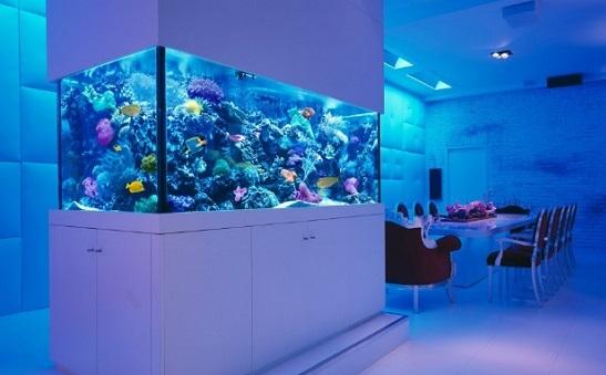v-chem-raznica-mezhdu-sinim-i-belym-svetom-dlya-morskix-akvariumov