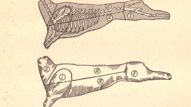Рис. 11. Схема разделки бараньей туши: Рис. 12. Схема разделки свиной туши: I —лопатка (передняя нога); II —грудинка; III —шея; IV — корейка; V — окорок (задняя нога) Рис. 11. Схема разделки бараньей туши: 1—лопатка (передняя нога): II — шея; III — корейка; IV — грудинка; V — окорок (задняя нога)