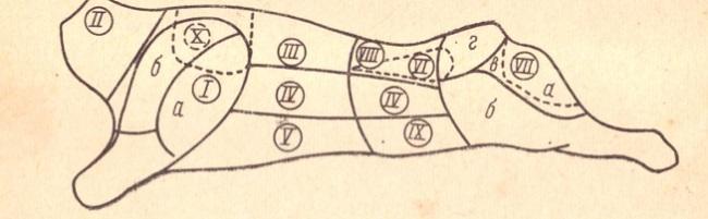 Рис. 10. Схема разделки говяжьей туши: I — лопатка (а — плечевая часть; б — заплечная часть); II — шея; III—спинная часть (толстый край); IV — покромка; V — грудинка; VI—вырезка; VII — заднетазовая часть (а — внутренняя; б — боковая; в —наружная; г —верхняя); VIII — поясничная часть (тонкий край); IX — пашина; X — подлопаточная часть