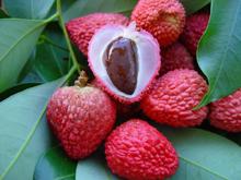 Плоды личи небольшие, яйцевидные или овальные