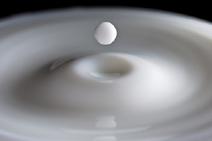 Основными белками молока являются  казеин (2,3 – 3,0), лактальбумин (0,5 – 1,0%)