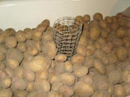Овощи в тару укладывают насыпью