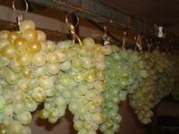 Храниться виноград ещё и воде