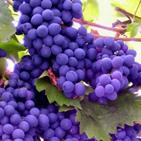 Для производства виноградных вин используют  винные сорта винограда, спирт-ректификат, для некоторых – сахар и ароматические настои