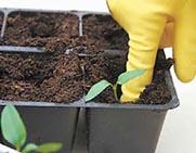 Не все семена прорастают при одинаковой температуре