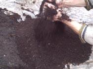 подготовка почвы  зависит  и от  самой культуры