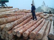 Качественная древесина