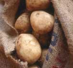 как собирать картофель?