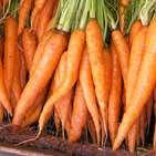 Как  хранить морковь зимой?