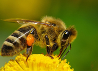 История развития пчеловодства