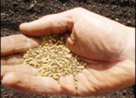 Как определить всхожесть семян