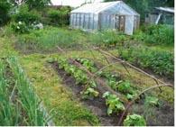 как выбрать место для огорода?