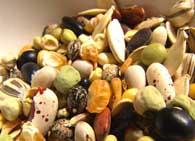 Характеристика семян