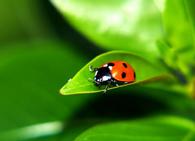 Отряд хищных насекомых