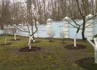 Санитарная обработка деревьев