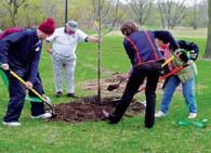 Правила посадки фруктовых деревьев