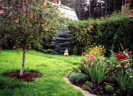 Уход за деревьями в саду