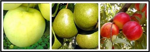 plodovye-krupnomery-1