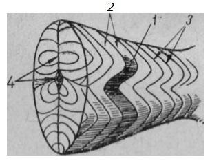 izmenenie-belkovyx-veshhestv-v-pishhevyx-produktax-pri-teplovoj-obrabotke-6