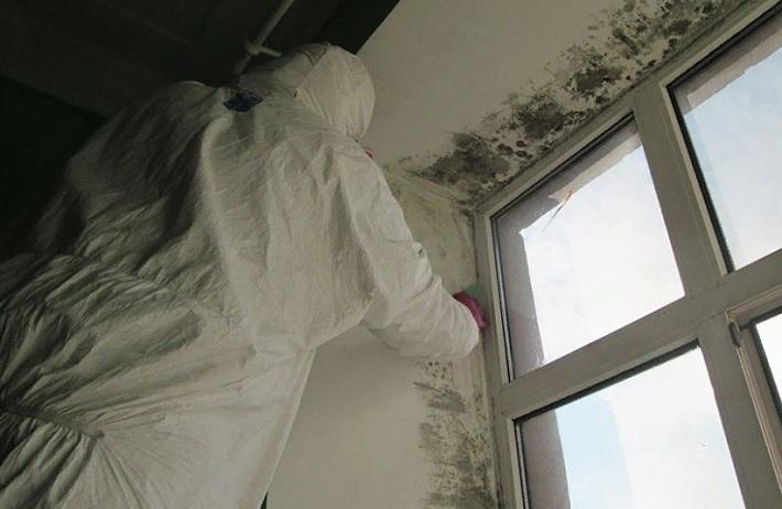 Как избавиться от плесени на откосах окон?
