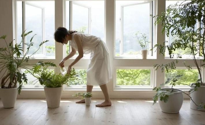 Как освежить и очистить воздух в доме?