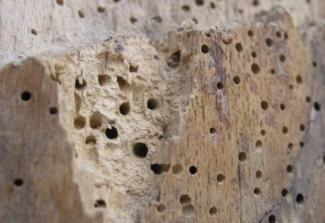 Обработка древесины от вредителей