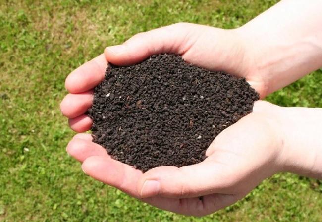 Применение биогумуса в открытом грунте