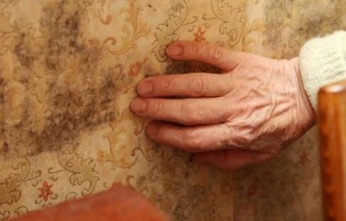 Противогрибковые препараты от плесени на стенах