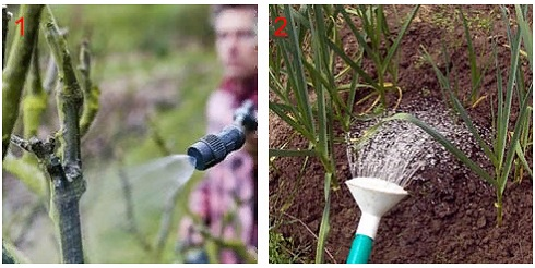 Борная кислота для капусты опрыскивание как обработать для завязи