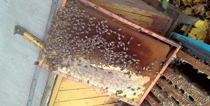 Когда формировать отводки пчел размножение пчел отводками