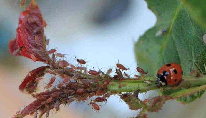 Что обрабатывают мочевиной осенью
