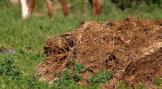 Как быстро получить компост из травы