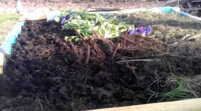 Когда удобрять огород перегноем?