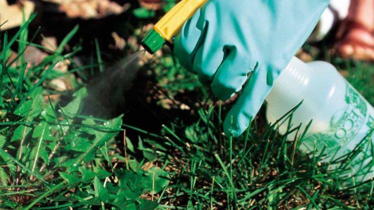 Как правильно уничтожать сорняки
